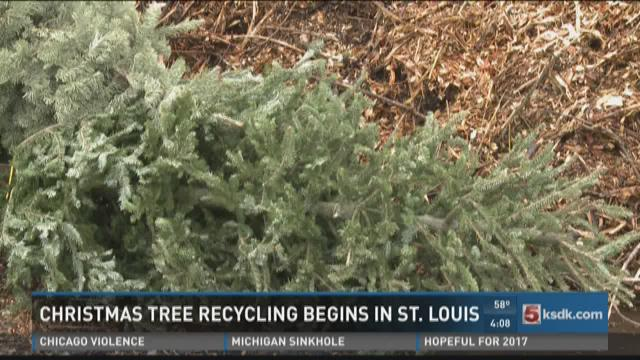 ksdk.com | St. Louis offering free Christmas tree recycling