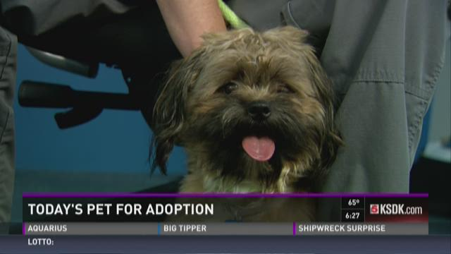 Pet for adoption - May 28