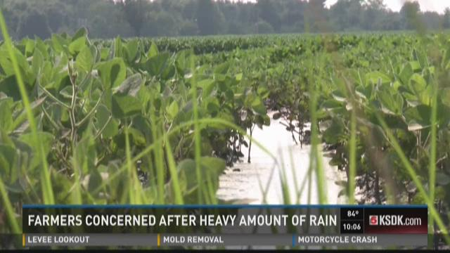 Farmers concerned after heavy rains