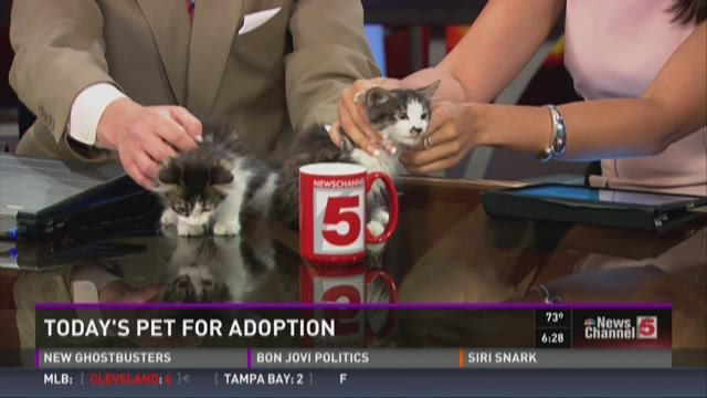Pets for adoption - July 1