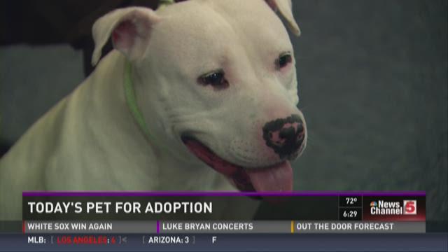 Pet for adoption - July 2