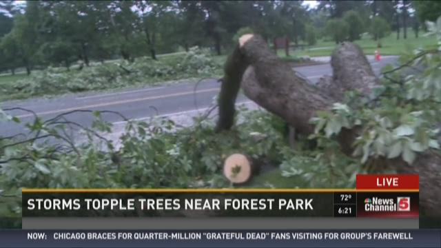 Storms topple trees near Forest Park