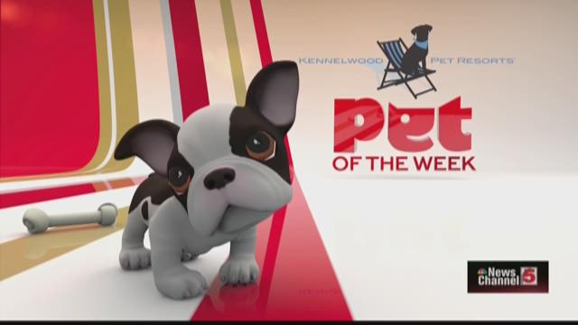 Pet of the week-special