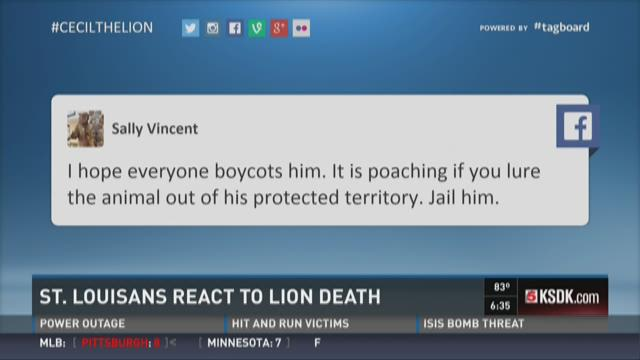 St. Louisans react to lion death