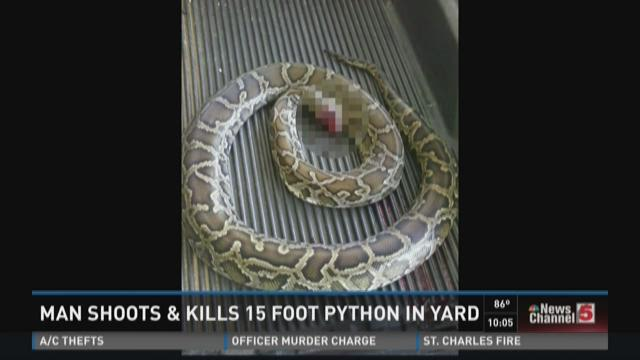 Man shoots, kills 15 foot python in yard