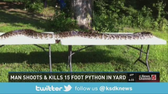 Man shoots & kills 15 foot python in yard