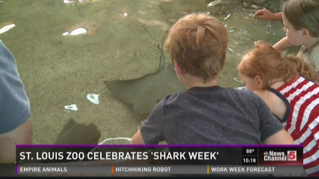 STL Zoo celebrates 'Shark Week'