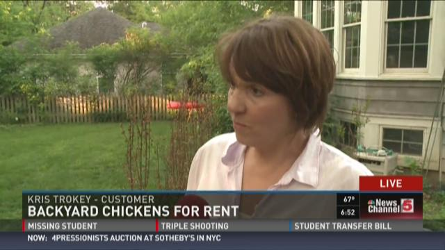 rent a chicken for your backyard