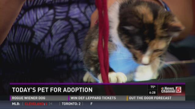 Pet for adoption - September 1
