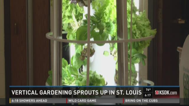 Vertical gardening sprouts up in St. Louis