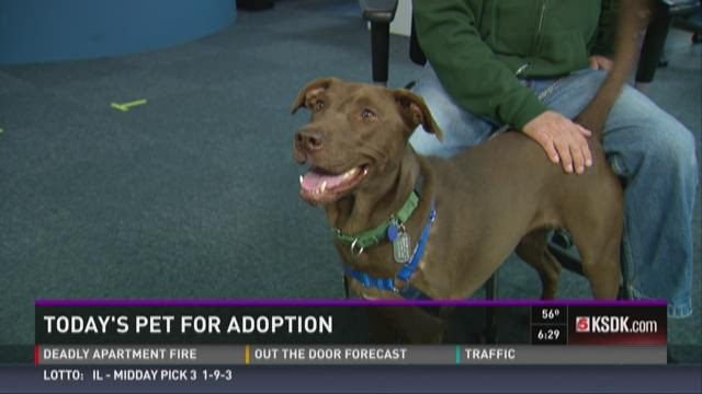 Sammy's Stars: Today's pet for adoption is Hannah